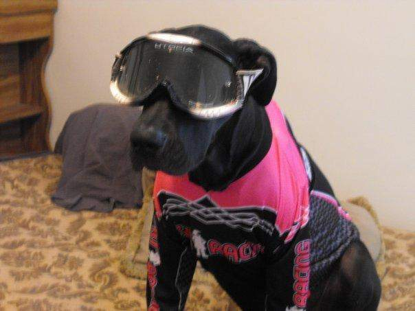 Moto Dog (Vote at facebook.com/racerxonline)