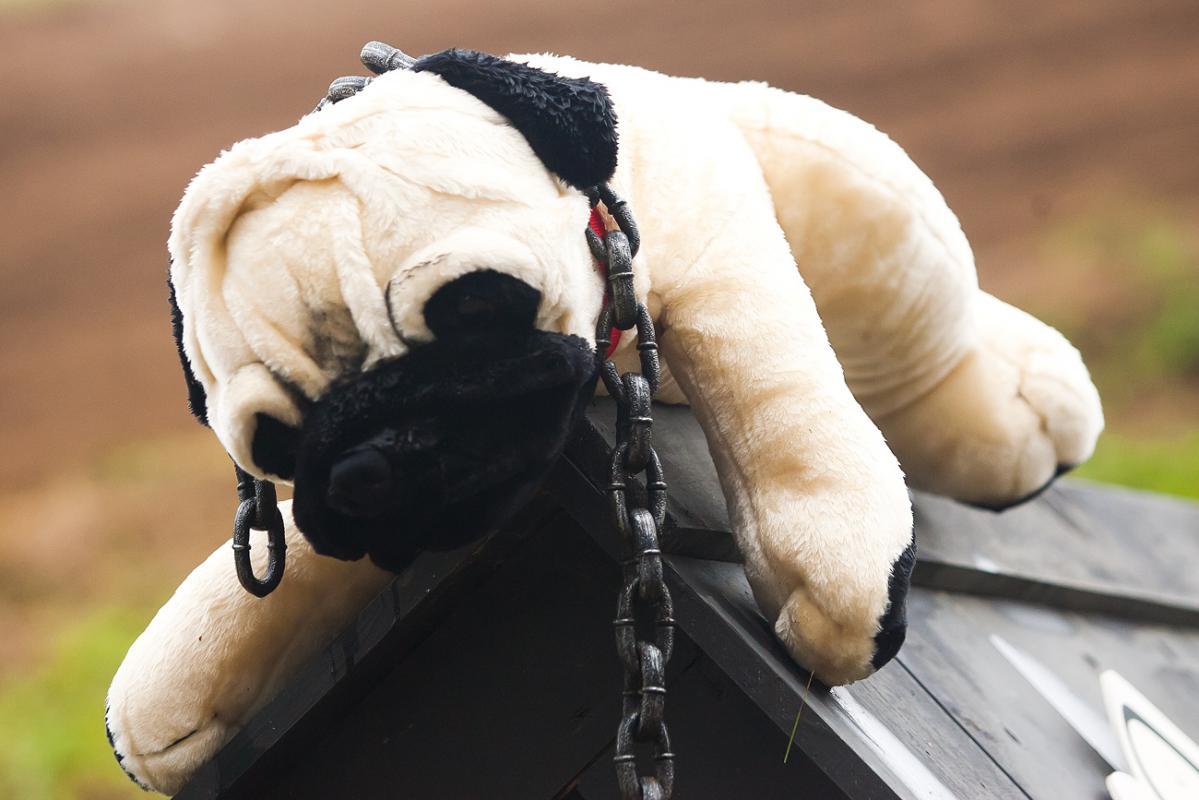Junk Yard Dog!