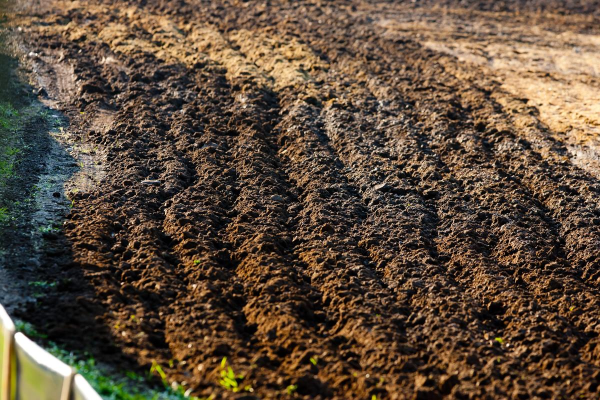 Unadilla dirt.