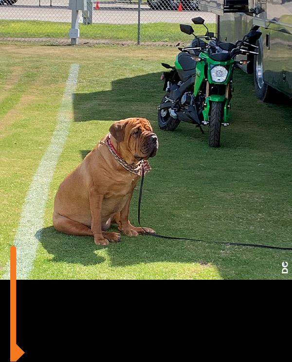 Big dog, little bike.